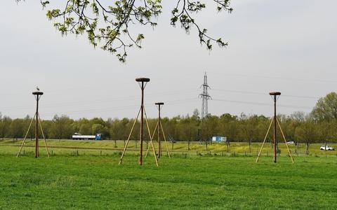Ter compensatie zijn er vier ooievaarspalen geplaatst. Direct werd er al een paal in gebruik genomen.