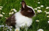 Vijf jonge konijntjes gestolen in Meppel
