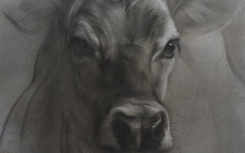 Een groot deel van het vrije werk van Jennifer Koning bestaat uit portretten van koeien.